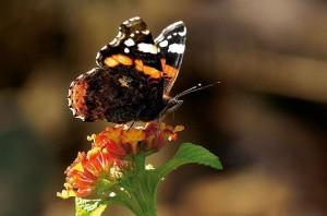 Auto-foucs-butterfly